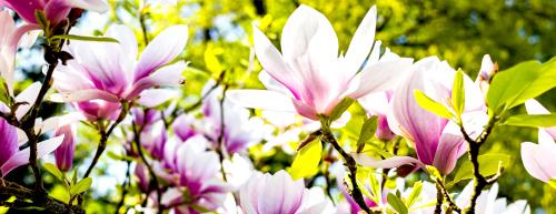 Flower-3339266
